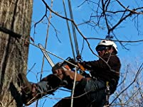 $200 or $300 to Spend on Tree Pruning Services