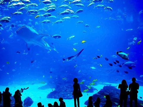 Aquarium In St Louis Images Frompo 1