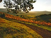 Sonoma Wine Country Stay for One or Two Nights with Wine Tasting Passes