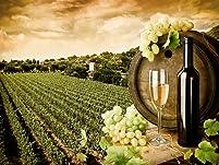 Summer Niagara Wine Tour