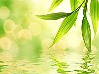 Raindrop Massage with Essential Oils