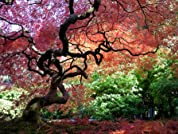 Tyler Arboretum: Admission for Two or Family of Five