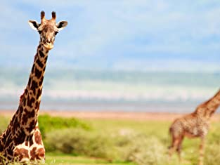 Giraffe-Viewing Safari
