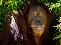 Family Admission to Suncoast Primate Sanctuary