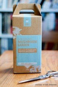 Mushroom Garden box