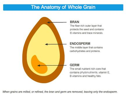 B001E6K6DA_1-336_anatomy_of_whole_grain.jpg