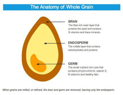 B001E6K6DA_1-336_anatomy_of_whole_grain.jpg