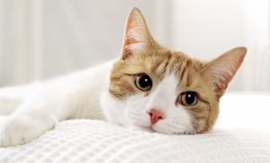 Raw Cat Food - Why It's the Best Diet For Your Cat, and What Are the Trade-offs For You?