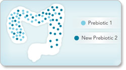 Prebiotics Diagram
