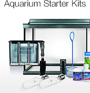 Fish Tanks And Supplies Have Become Extremely Popular With Fish ...