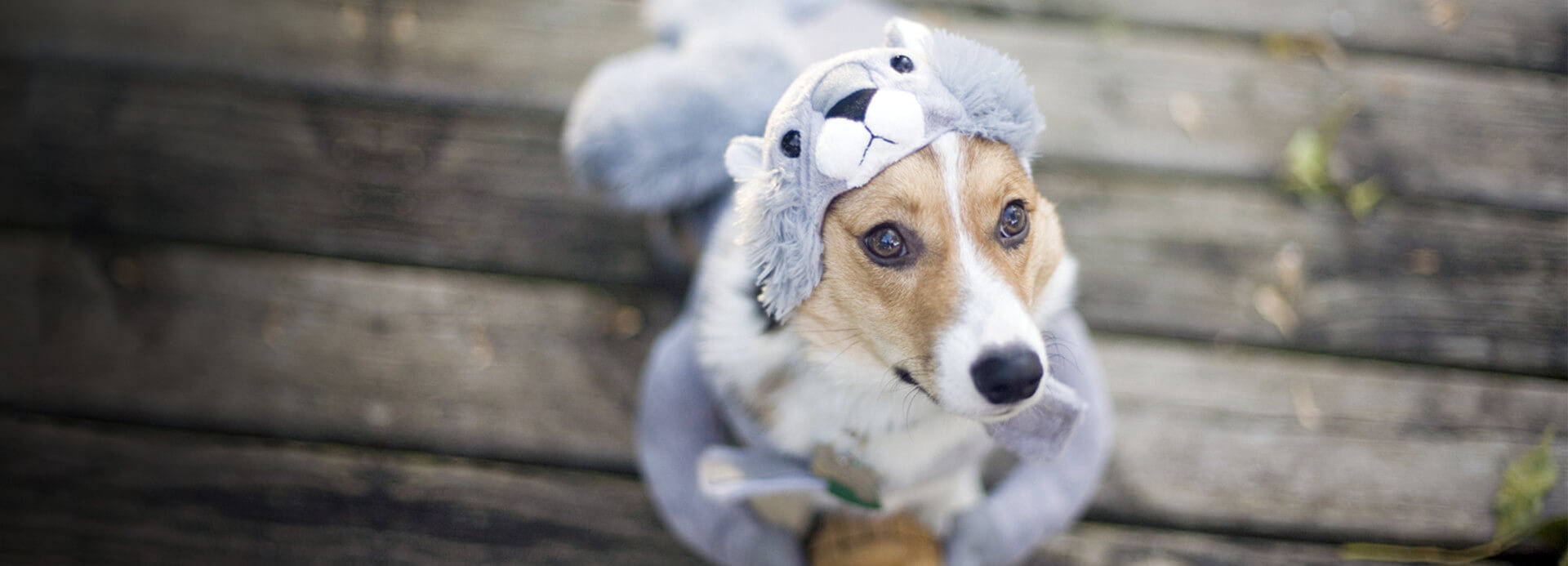 Pet Halloween Costumes and Treats