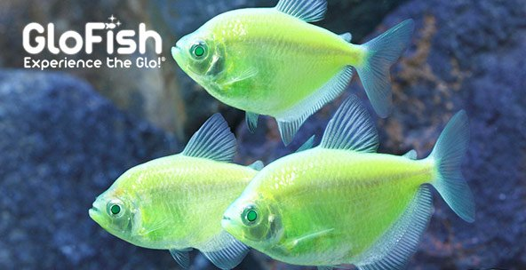 Shop the new Glofish aquarium