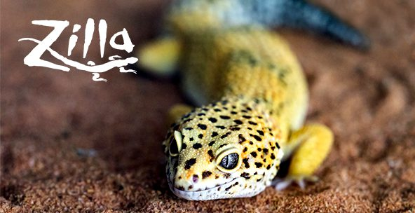 Build quality ecosystems for your pet with Zilla reptile products