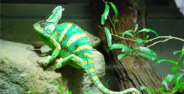 Upscale Reptile Habitat Décor