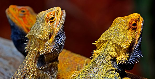 Shop Reptile Heat Lamps and Mats