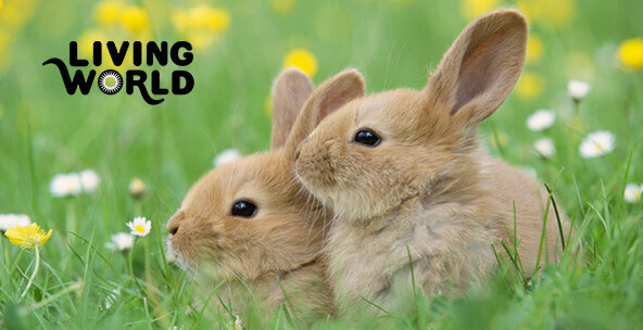 Living World Small Animal Products