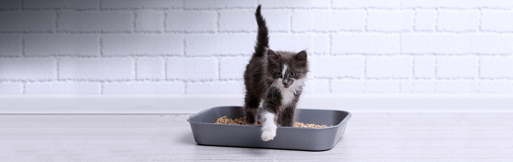 Cat Litter & Housebreaking