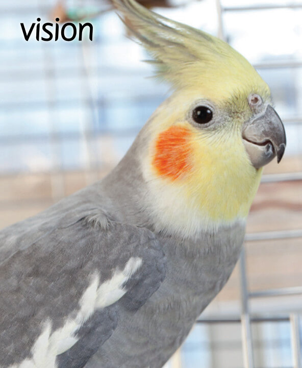 Vision bird cages