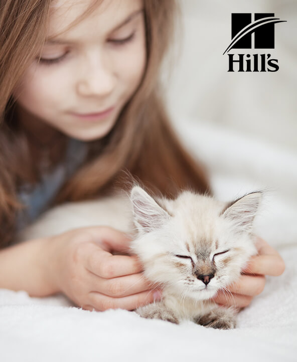 Hill's Cat Food