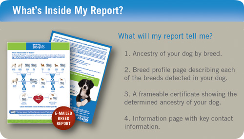 Photo showing sample emailed report