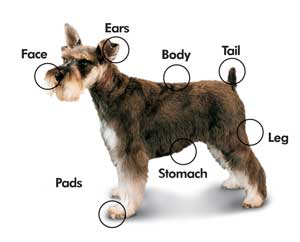 This is a picture of the different areas to cut your dog's hair