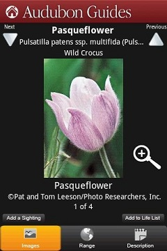 Audubon Wildflowers