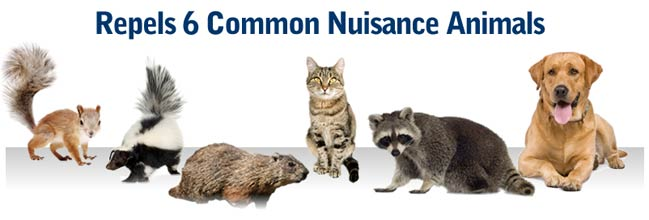 Repels 6 common nuisance animals
