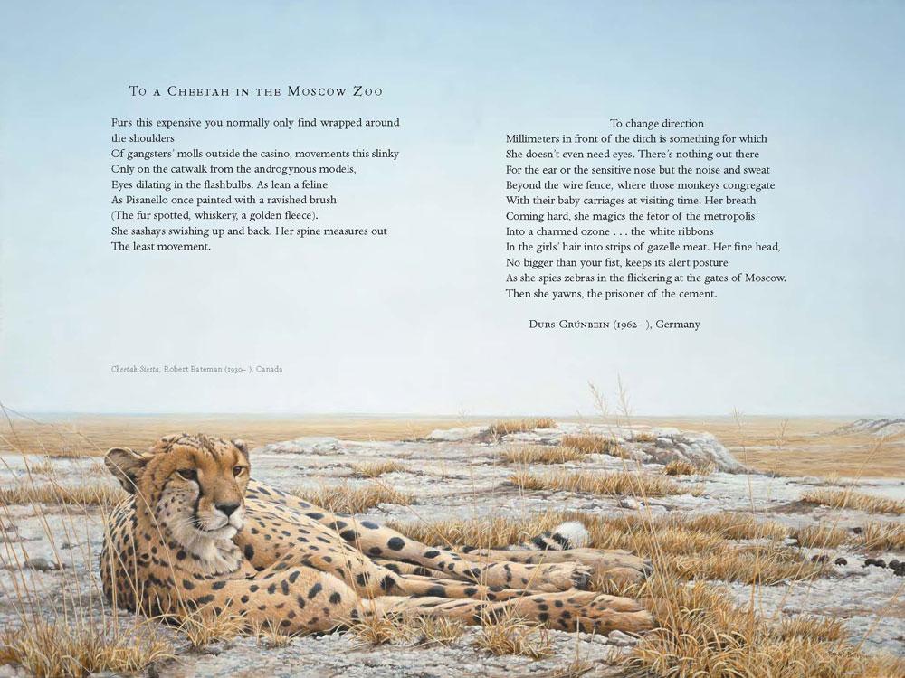 Cheetah quotes - photo#5