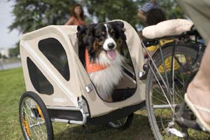 A dog being towed by An a Croozer dog bicycle trailer