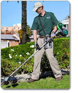 LEHR ST025DS Propane-Powered Eco Trimmer with Detachable Straight Shaft