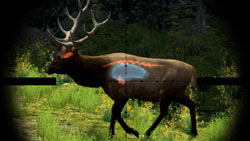The possible target areas on an elk seen while using a scope in 'Cabela's Big Game Hunter 2010'