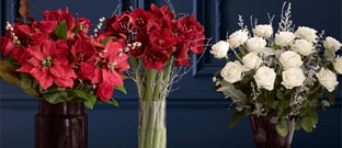 Festive Flowers & Plants - Beautiful Winter Blooms