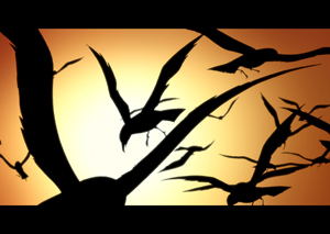 http://g-ecx.images-amazon.com/images/G/02/uk-dvd/paramount/blackfreighter300.pt3.jpg