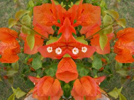 Image of a flower illustrating the Mirror Shooting Mode.