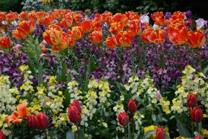 Image of vividly coloured spring flowers in an outdoor display.