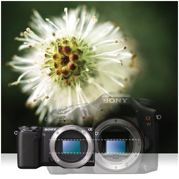 Large APS-C sized sensor captures more light to give you better images