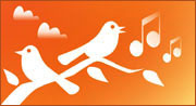 Sound choice of morning birds