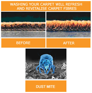 how to clean dust mites from carpet