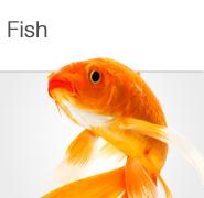 Fish and Aquatic Pet Supplies
