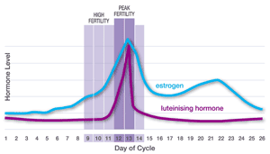 Graph showing increase in estrogen level two days before peak fertility