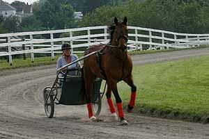 Ein Pferd fürs Leben 06