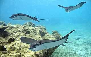 Galapagos - Das letzte Tierparadies auf Erden