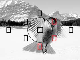 9-Punkt-AF-System, iFCL AE-Messsystem mit Dual-Layer-Sensor über 63 Zonen und Reihenaufnahmen mit bis zu 3,7 Bildern pro Sekunden - tolle Fotos leicht gemacht.