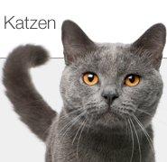 Restposten Katzenfutter und Katzenbedarf