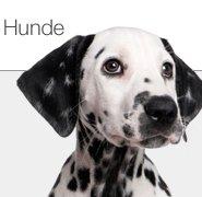 Restposten Hundefutter und Hundebedarf
