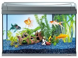 AquaArt Goldfish Aquarium-Komplett-Set 60 L, modernes Design in Verbindung mit innovativer Technik und einfacher Pflege, anthrazit