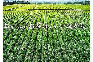 おいしいお茶は、いい畑から。
