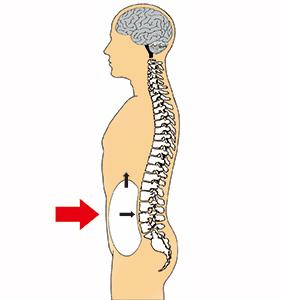 腹圧の上昇効果
