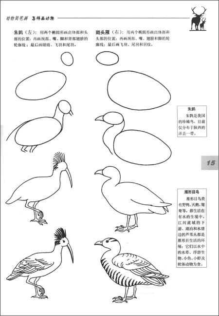 生物绘画基础:怎样画动物(第2版):亚马逊:图书