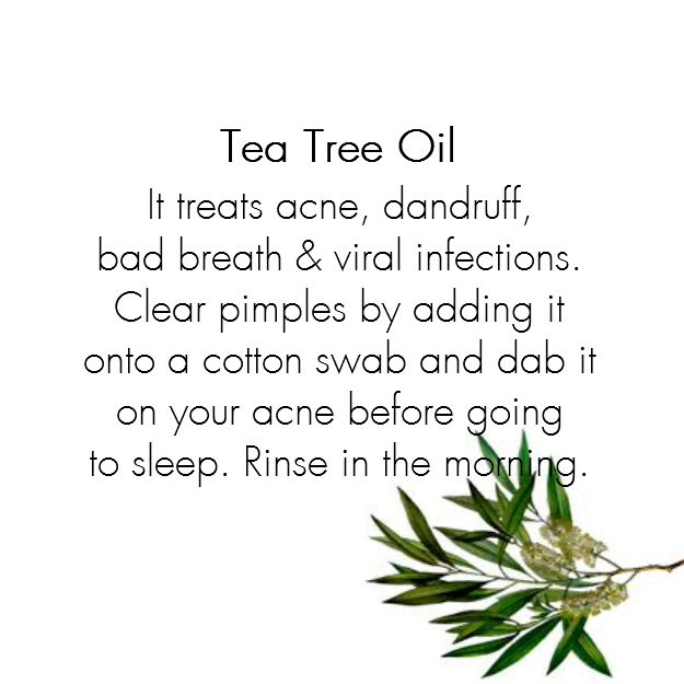 It treats acne, dandruff,  bad breath & viral infections. Clear pimples by adding this oil onto a cotton swab and dab it on your acne before going  to sleep. Rinse in the morning.